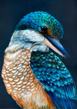 'Kingsley' the sacred Kingfisher print pre-order
