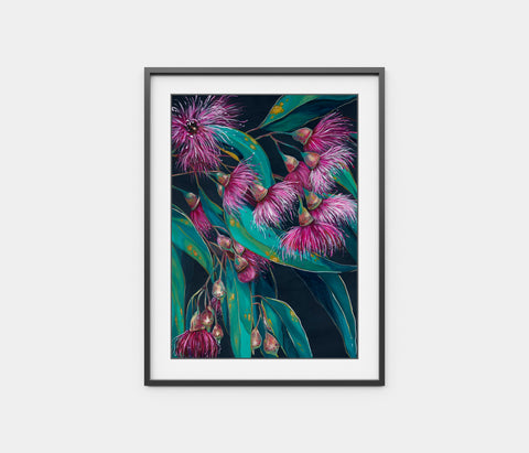 'Candy Blossoms' Flowering Gum