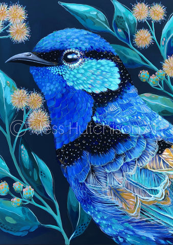 Clancy the Splendid Fairy Wren