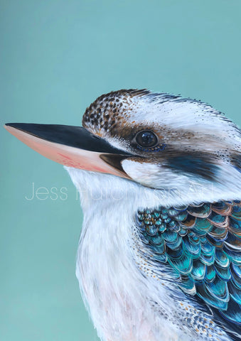 'Clifford' the Kookaburra