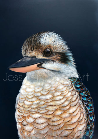 'Ollie' the Kookaburra