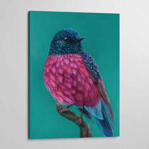 'Roy' The Pink Robin canvas print