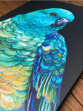 'Banjo' the Red Rumped Parrot canvas print