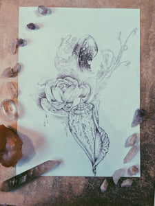 Dewy Rose & Shells // Original Drawing