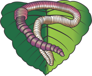 Carney's Crawlers Fact:  We grow over 3 million worms per year!