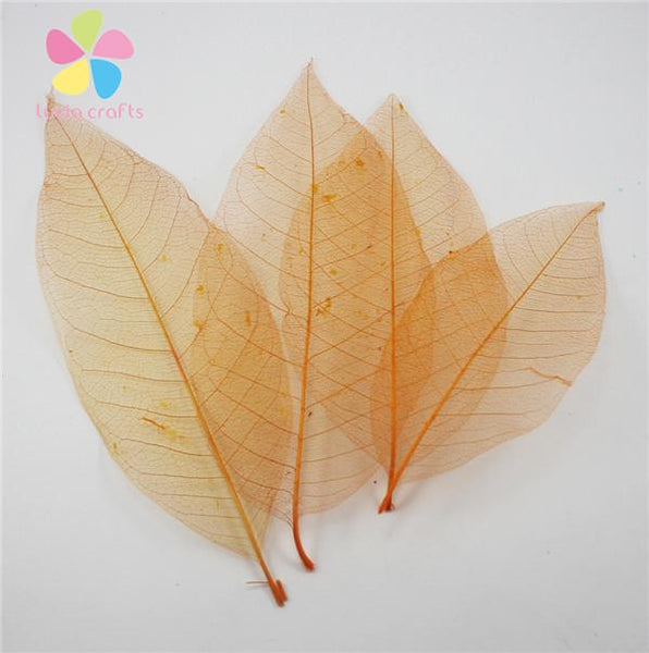 Approx 8*22cm Randomly Mixed Colors Natural Skeleton Leaves For Diy 6pcs 24pcs 056004001