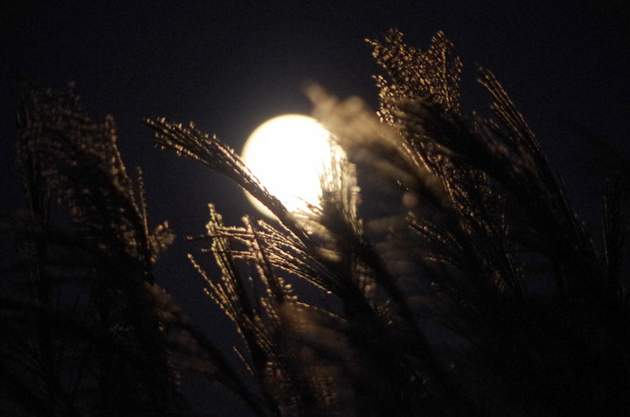 A full moon with rice stalks in the foreground.