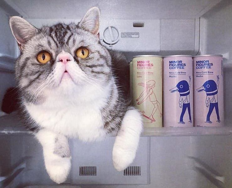How we brew Minor Figures Nitro Cold Brews - Blog - photo of a cat in a fridge next to the Latte and Mocha cans