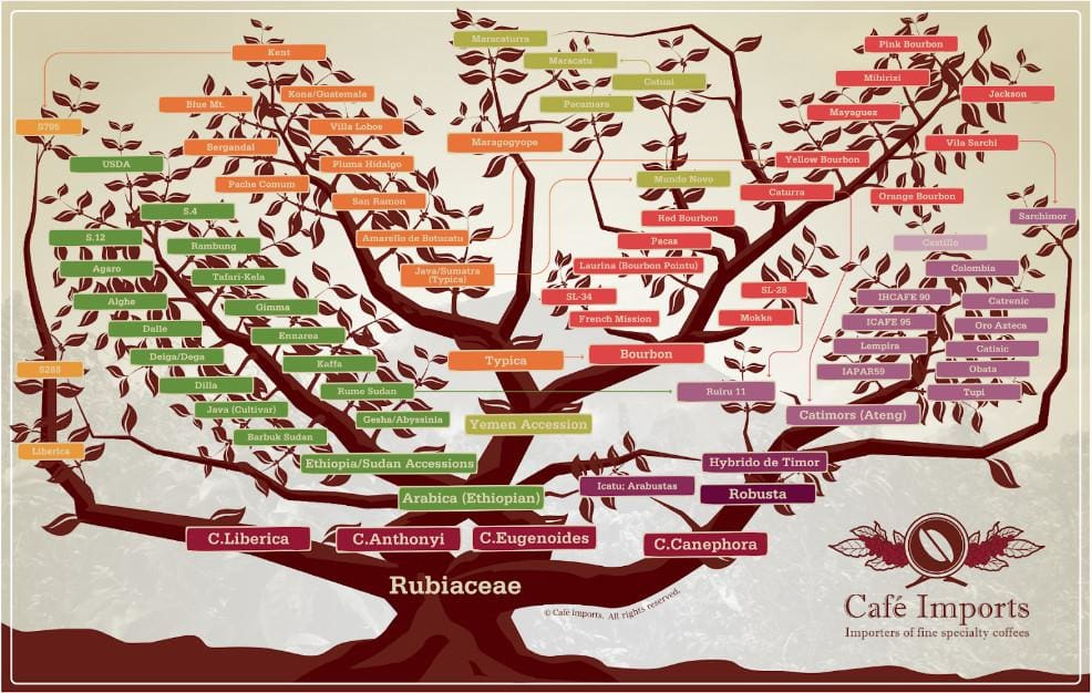 How we select our coffee beans - Blog - coffee varietal trees to better understand what you're drinking