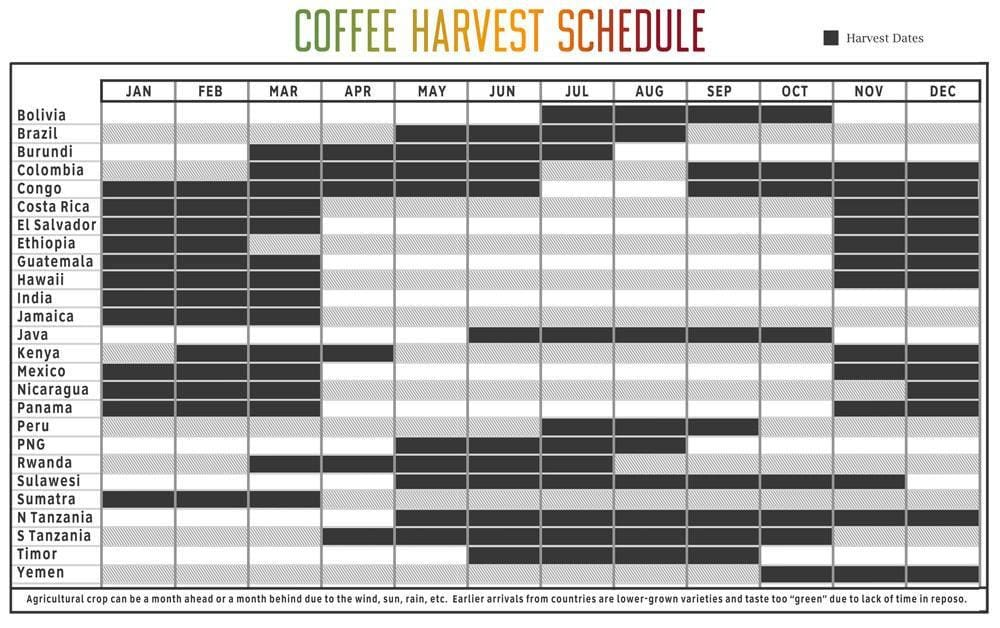 How we select our coffee beans - Blog - Coffee seasons with harvest time per location