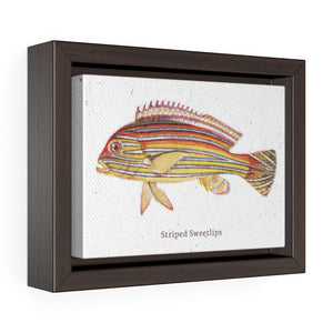 Striped Sweetlips Horizontal Framed Premium Gallery Wrap Canvas