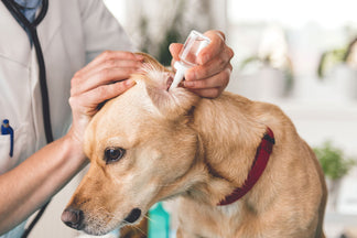 image for How to Clean Your Dog's Ears