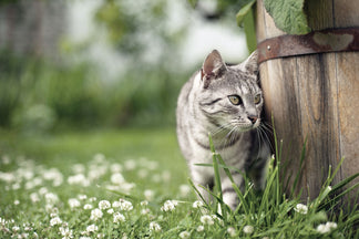 image for Garden Safety Tips for Families with Pets