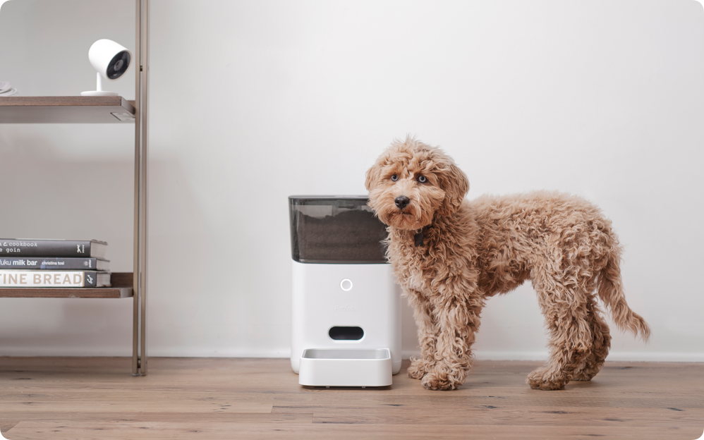Automate your  pet's daily meals.