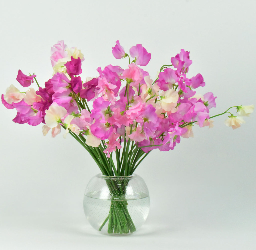 Monofloral hand-tied arrangement composed of shades of pink Sweet Pea designed in clear glass vase.