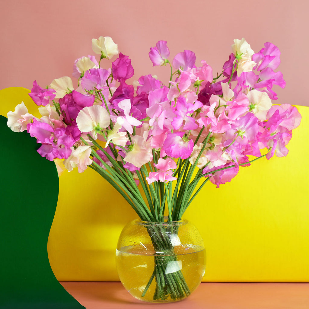 Hand-tied arrangement composed of shades of pink Sweet Pea designed in clear glass vase.
