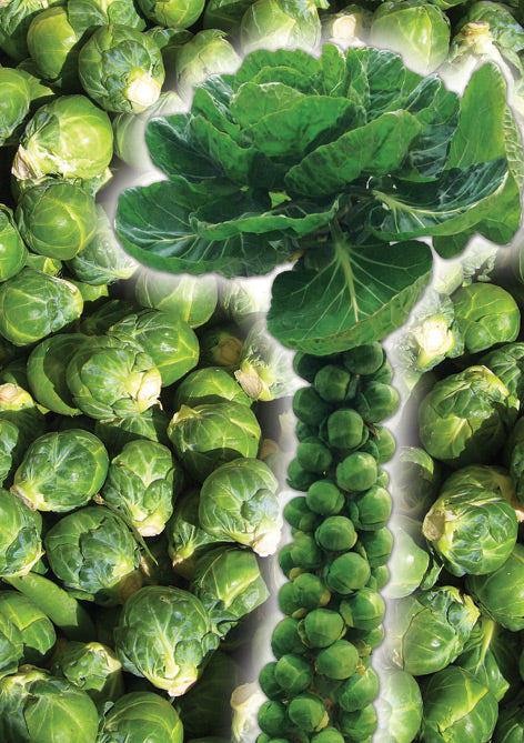 88 - Brussels Sprouts