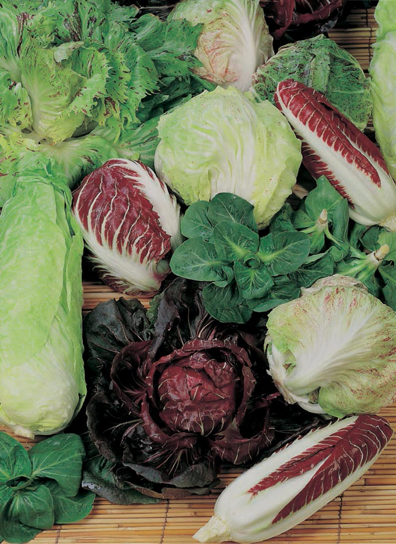 114 - Radicchio-Mixed Blend of Red/Green