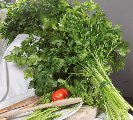342 - Giant Parsley Prezzemolo Gigante NON-GMO