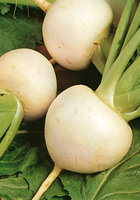 404 - White Turnips