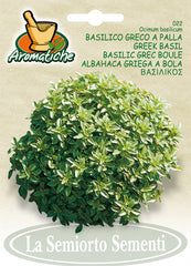 22 - Greek Basil
