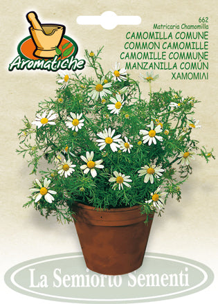 662 - Common Chamomile