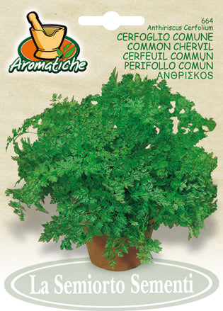 664 - French Parsley Chervil Cerfoglio Comune NON-GMO