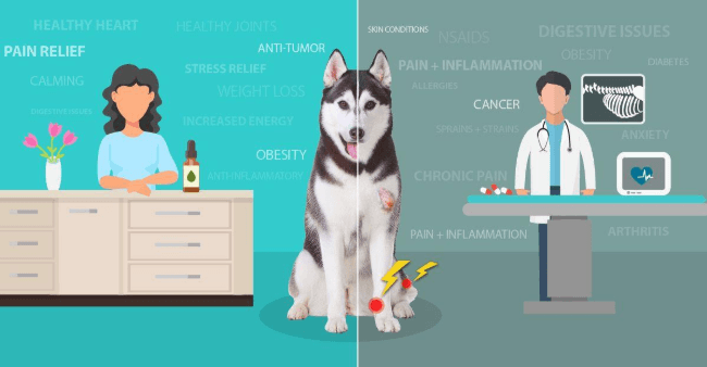 The Endocannabinoid System in You and Your Dog