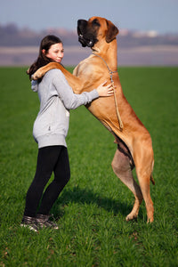 Large dog and woman - photo credit Pixabay