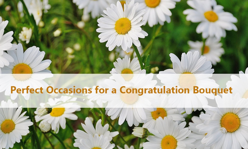 Perfect Occasions for a Congratulation Bouquet