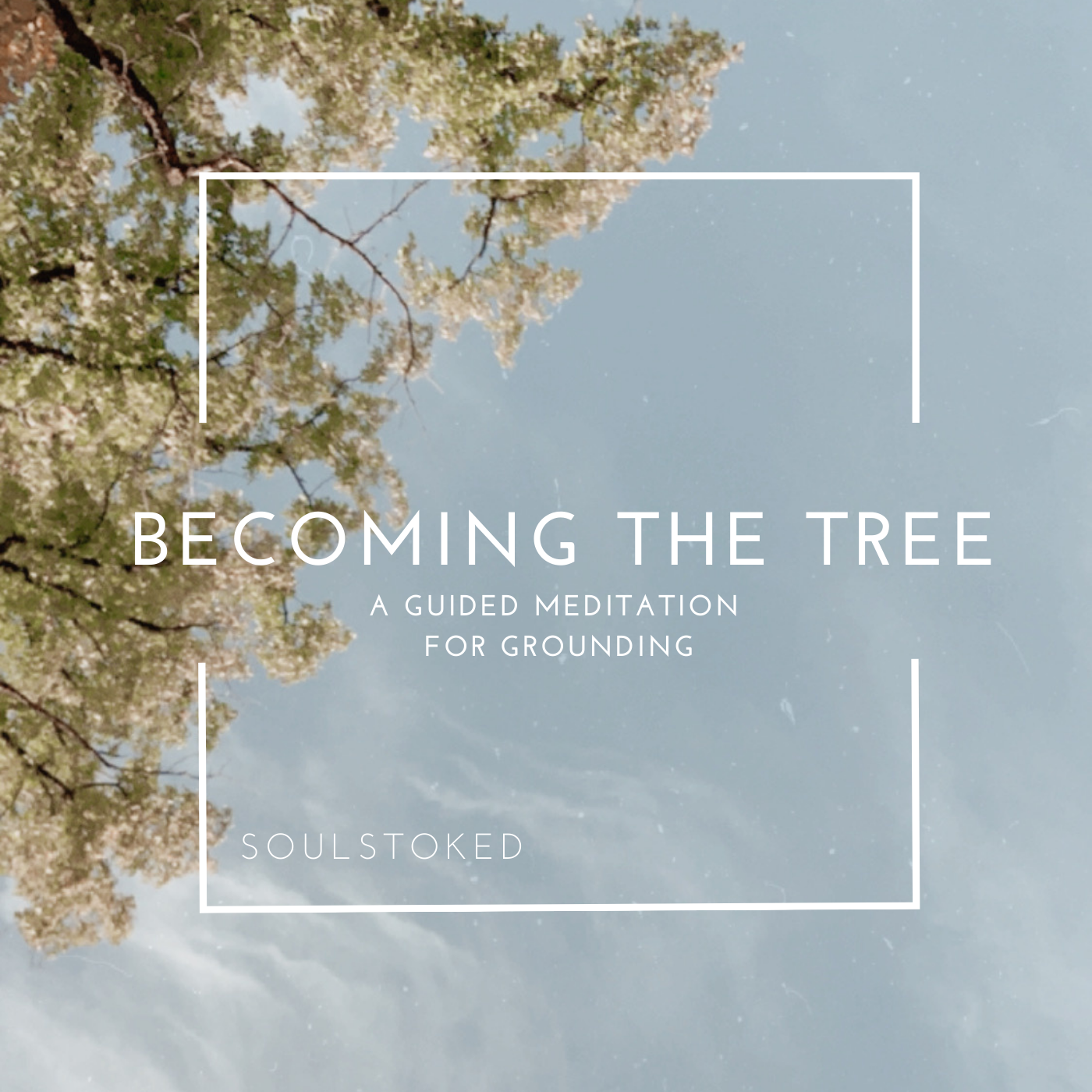 Becoming The Tree