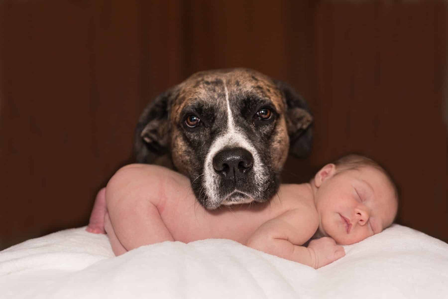 How To Prepare You Dog For The Arrival Of A Baby