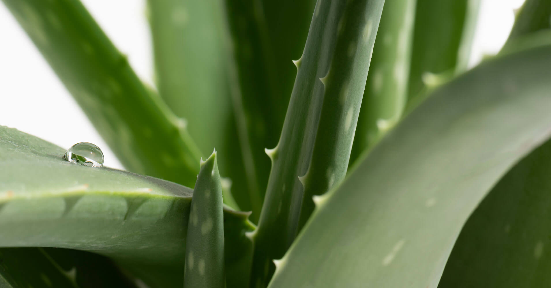 How to use aloe for skin