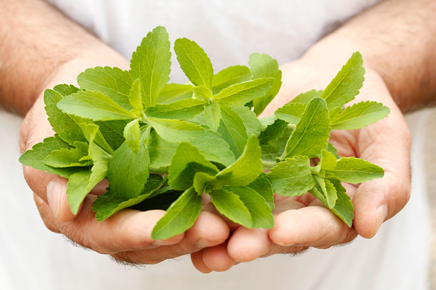 five reasons why we love stevia