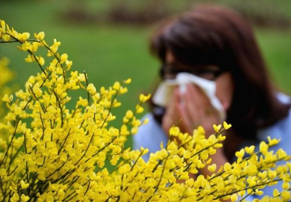 3 Home Remedies for Seasonal Allergies