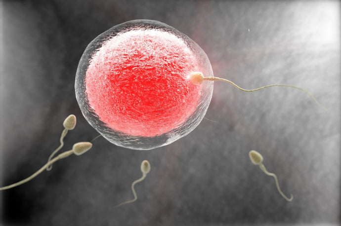 Low Sperm Count - Causes and Natural Treatment Options