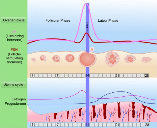 What is a Luteal Phase Defect or LPD?