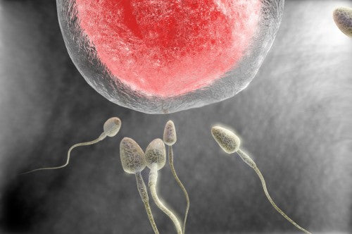 Does Abstinence Help to Improve Sperm Count?