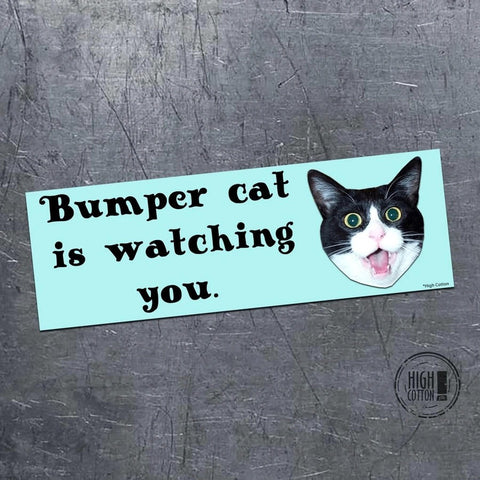 Cat Is Watching Bumper Magnet