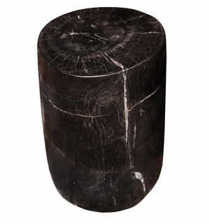 Polished Fossil Stool