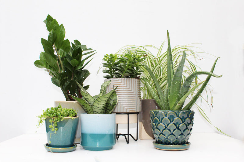 Selecting the Right Plants for the Light in Your Space