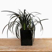 Load image into Gallery viewer, BLACK MONDO GRASS 1QT.