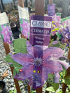 Clematis Prince Phillip 1G