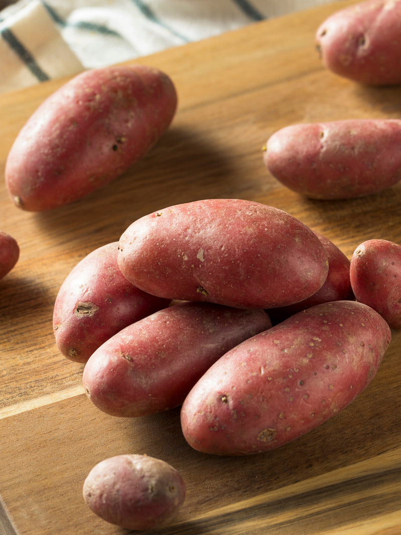 Seed Potato French Fingerling