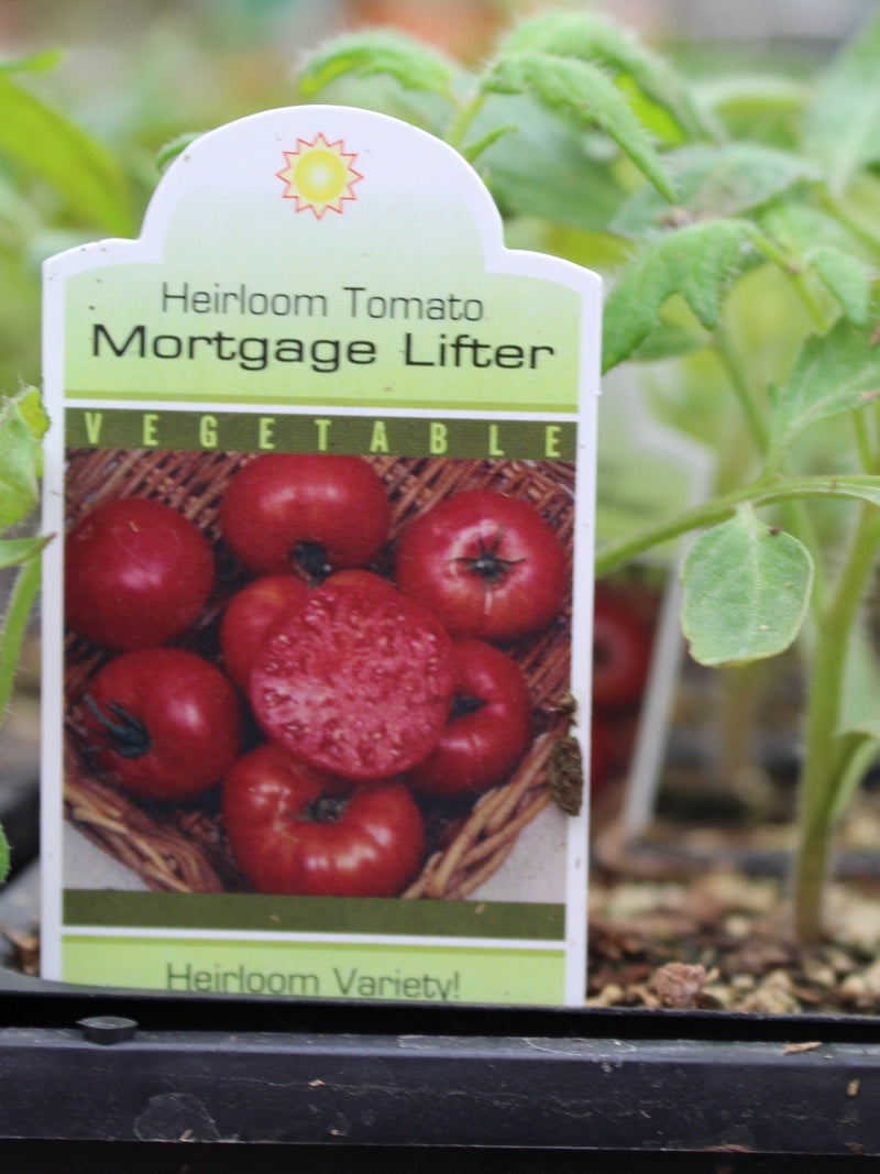 Tomato Heirloom Mortgage Lifter