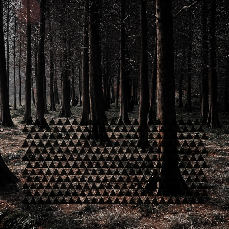 Rows of black Rook triangles on a background of a dense woodland represent our scent Forest by Rook Perfumes
