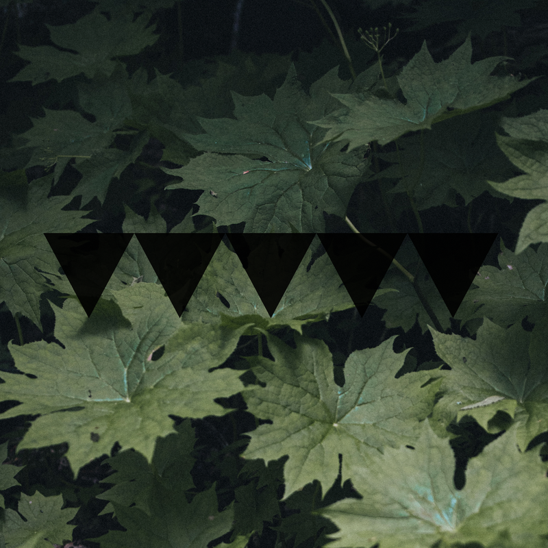 The five inverted black Rook triangles on a background of dark green leaves represents our scent Undergrowth by Rook Perfumes