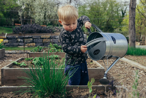 A young child watering a garden