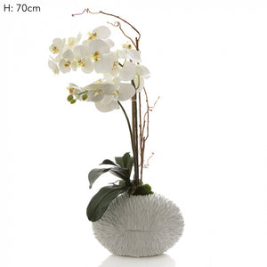 Artificial Phalaenopsis in White Shell Vase White