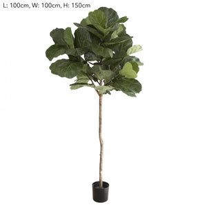 1.5m Fiddle Leaf Tree w/61 Lvs